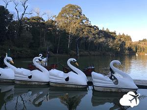 Pedalinhos em forma de cisne no Lago Negro